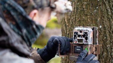 Wildtierkamera Test, Vergleich & Empfehlung
